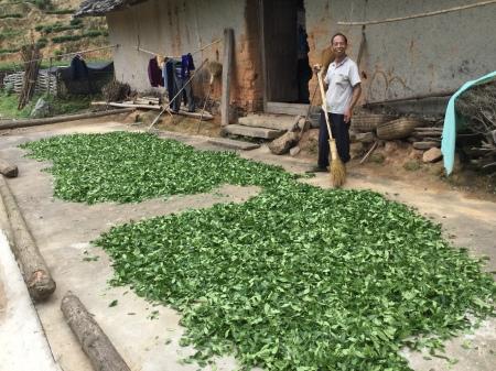 Gan De Tie Guan Yin Farmer